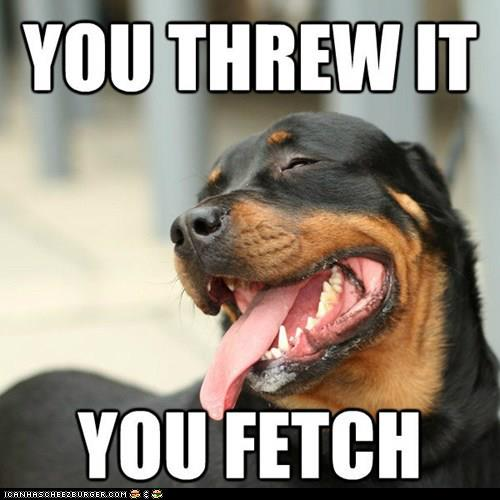 Meme Dogs And Food Make Me Hapy