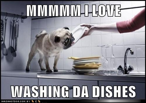 Clean Up Your Own Dishes Cat Meme
