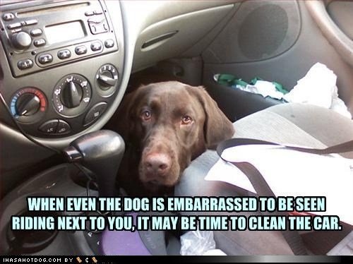 The Dog Days Of Summer Doggie Funnies Motley News