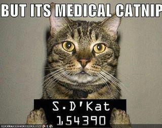 Catnip Really Make Cats High