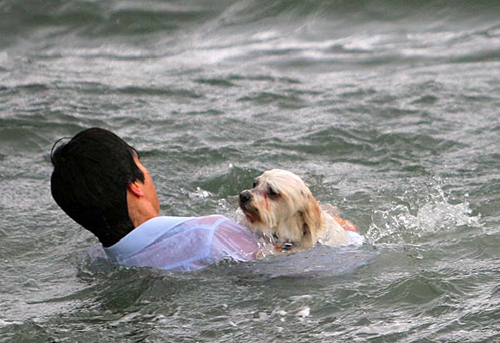 https://llwproductions.files.wordpress.com/2012/06/sue-drummond-shih-tzu-bibi-being-rescued-by-raden-soemawinata-in-melbourne-05.jpg