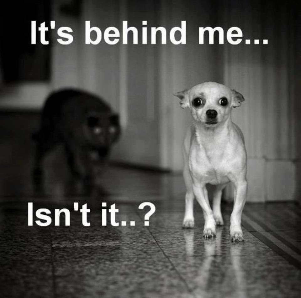 Funny dog photo with caption dog stalked by cat