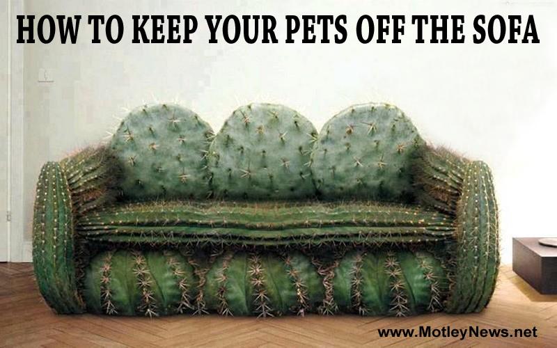 Funny Friday Night Meme : It's the friday night funnies! tgif!! u2013 motley news photos and fun