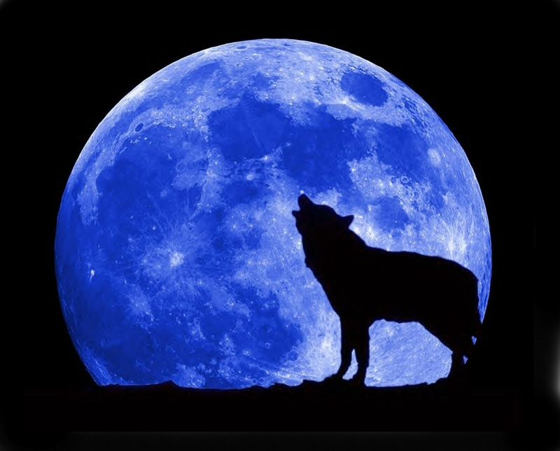 blue-moon-wolf-full