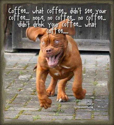 funny-dog-running-hyped-on-coffee-funny-