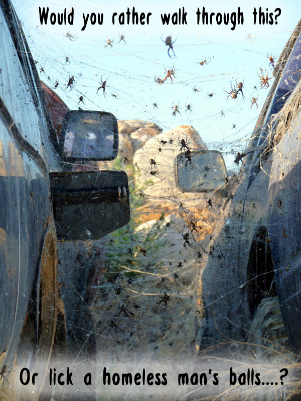 [Image: nest-of-spiders-between-cars.jpg?w=600&h=600&crop=1]