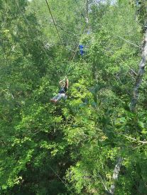 Stop the Keystone XL Pipeline_tree top activists traversing between trees