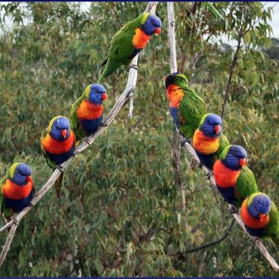 Lots of colorful tropical birds