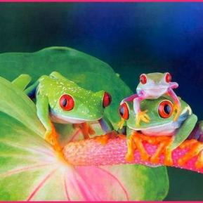 More colorful tree frogs