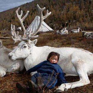 Nomadic child sleeping against white caribou reindeer