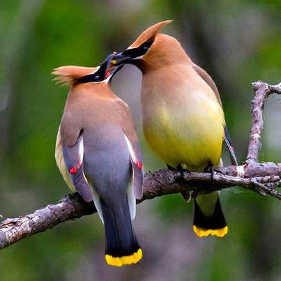 Pair of colorful birds