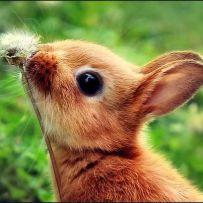 Rabbit sniffing dandelion fluff