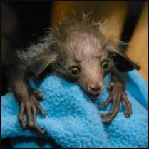 So ugly it's cute whatever animal this is