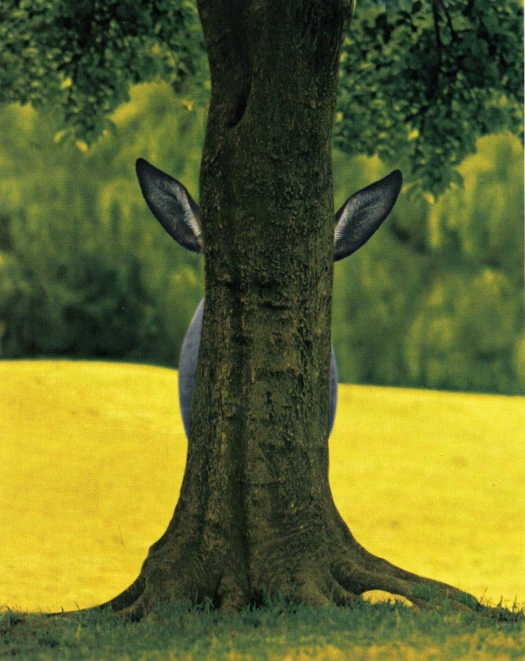 Donkey hide and seek behind a tree