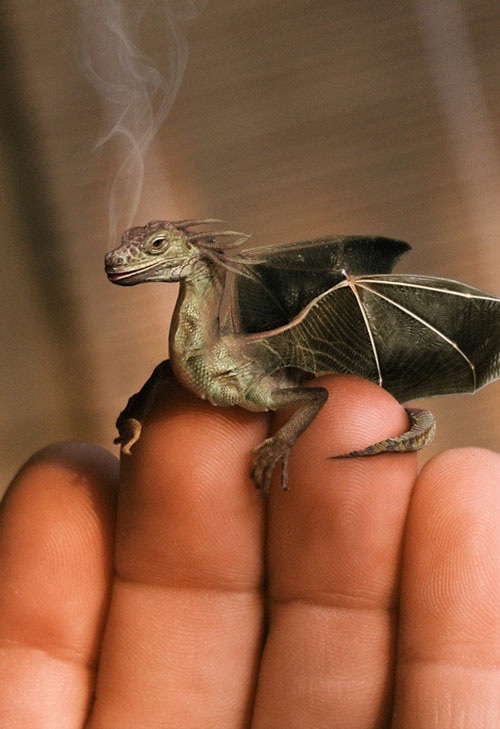 The Smoking Dragon