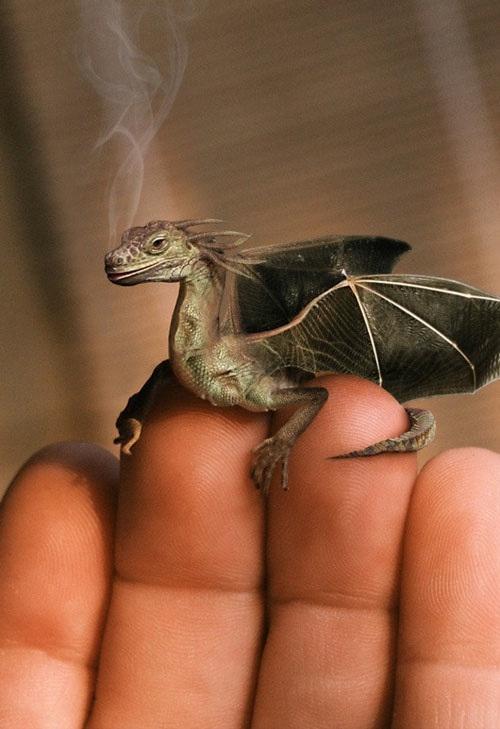 The Smoking Dragon