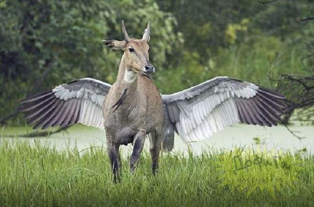 7-perfectly-timed-pictures-illusion of a winged antelope