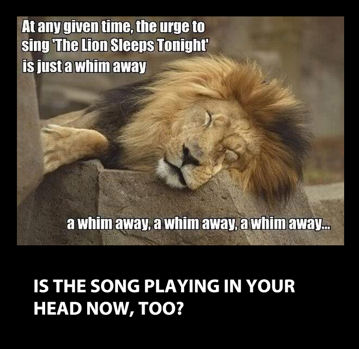 A funny image with caption the Lion Sleeps tonight