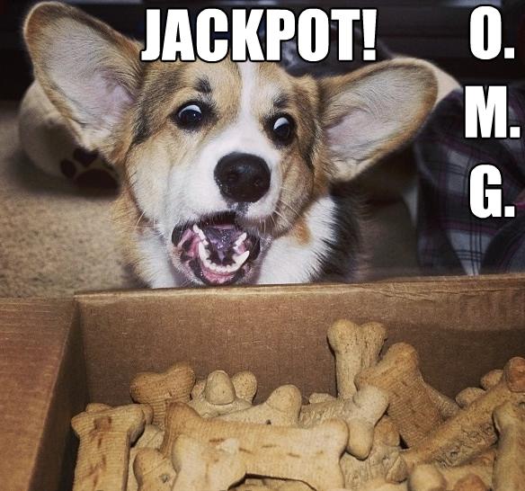 Dog funny Corgi hits biscuit jackpot
