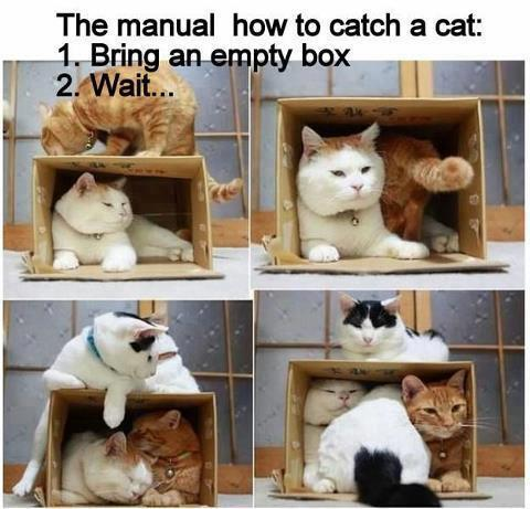 funny image how to catch cats use empty box