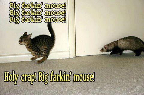 Funny photo captions cat running from ferret big mouse