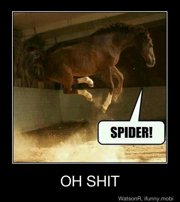 Funny photo captions horse jumping sees spider