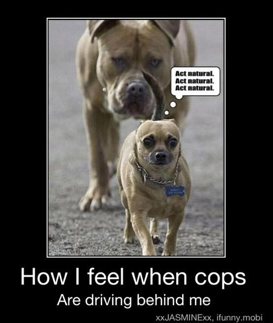 Funny photo captions little dog followed by big dog