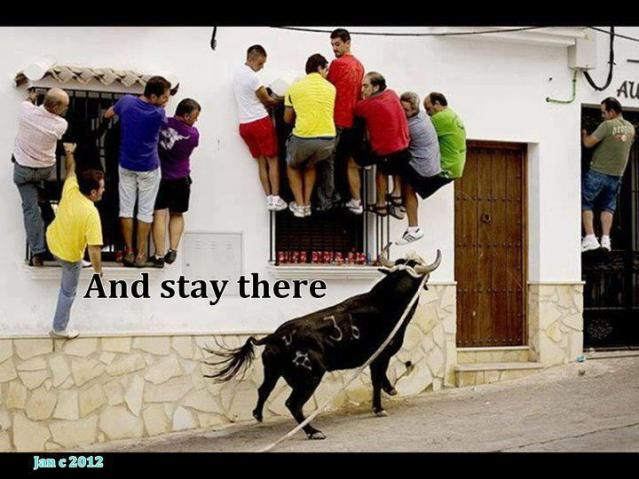 Funny photo loose bull people climb on windows