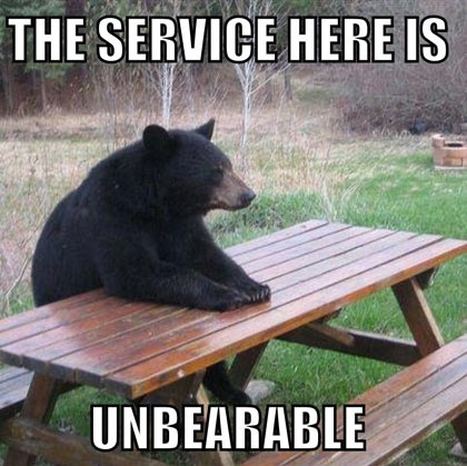 Humorous photo funny caption bear at picnic table
