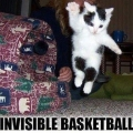 Invisible_cat_basketball