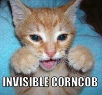 Invisible_cat_corncob