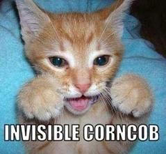 Invisible_cat_corncob