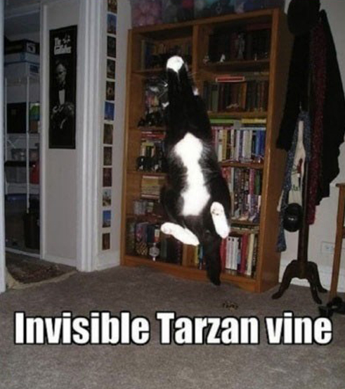funny invisible cat photos of crazy cat fun motley news photos and fun. Black Bedroom Furniture Sets. Home Design Ideas