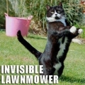 Invisible_cat_lawnmower