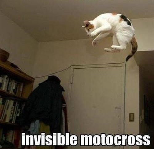 Invisible_cat_motocross