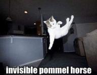 Invisible_cat_pommel_horse