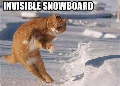 Invisible_cat_snow_board