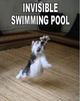 Invisible_cat_swimming pool