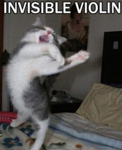 Invisible_cat_violin