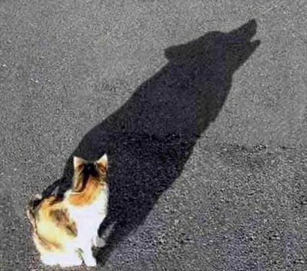 perfectly-timed-pictures-double-take-illusion-cat-shadow
