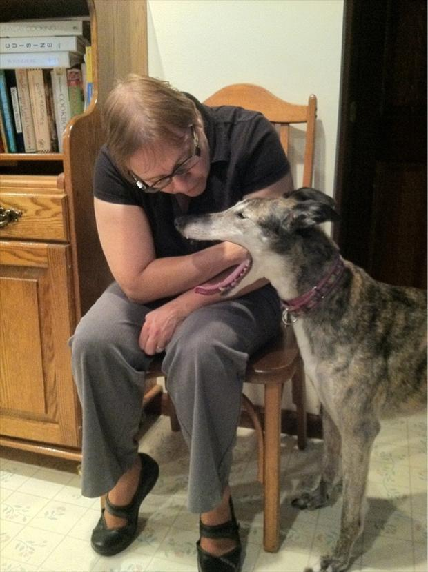 perfectly-timed-pictures-woman-with-hand-in-dogs-mouth