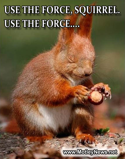Picture with funny caption squirrel and nut Use the force