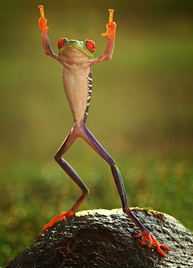 Shikhei Goh of Indonesia Frog flipping the double-bird not photoshopped