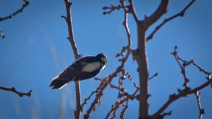 Woodpecker 2013_01_18 02