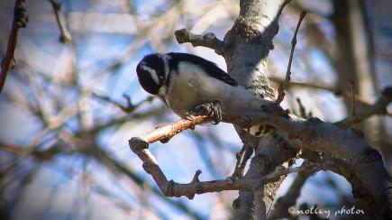 Woodpecker 2013_01_18 03