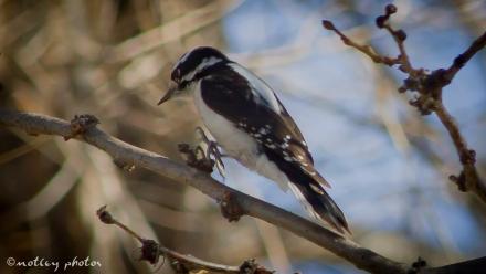 Woodpecker 2013_01_18 05