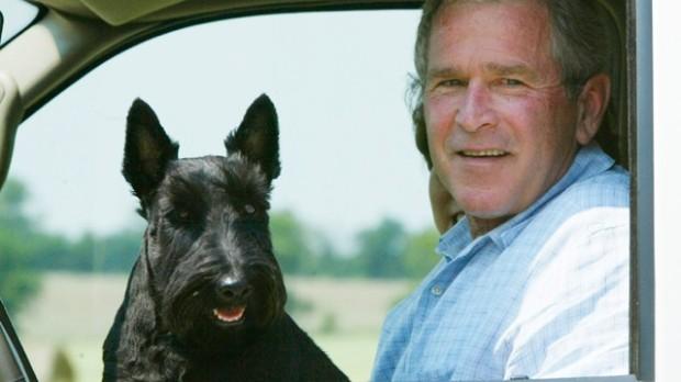 Barney Bush on George's lap in car. REUTERS/Rick Wilking