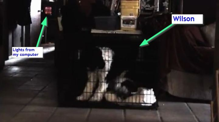 Dog making sounds like a squeaky toy - screenshot