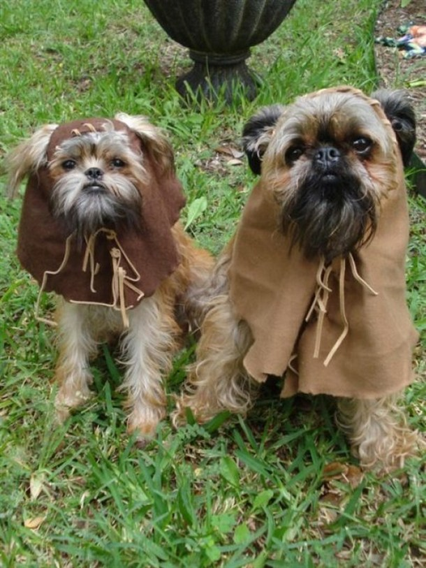dogs dressed as ewok