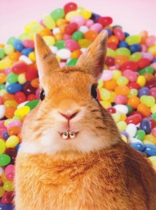 easter humor bunny with braces